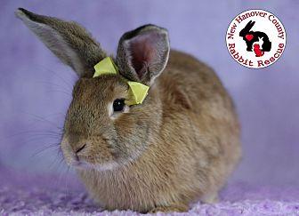Adopt A Pet :: Cherry  - Wilmington, NC