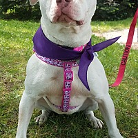 Adopt A Pet :: Vicki Vale - Foster Needed - Detroit, MI