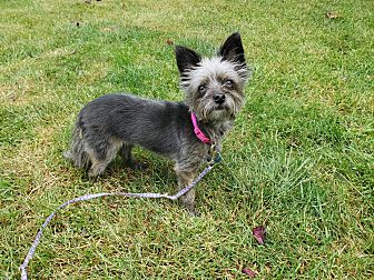 Adopt A Pet :: Betty Lynn  - Renton, WA