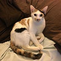 Adopt A Pet :: Buffy - New York, NY