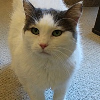 Adopt A Pet :: Nell - Lutherville, MD