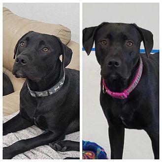 Adopt A Pet :: Maverick  - Anchorage, AK