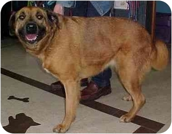 Mastiff Mix Dog for adoption in North Judson, Indiana - Dee Dee