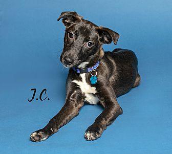 Adopt A Pet :: JC  - Houston, TX