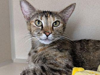 Adopt A Pet :: Leta  - Laramie, WY