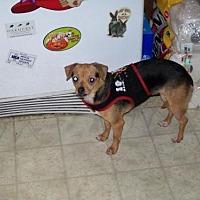 Adopt A Pet :: Becca - Fort Worth, TX