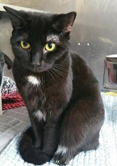 Adopt A Pet :: Celaena  - Mt Vernon, IN
