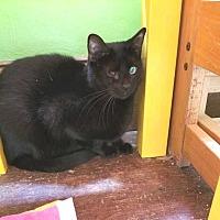 Adopt A Pet :: Bandit - Putnam, CT