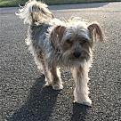Adopt A Pet :: Marvin