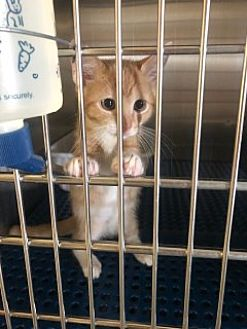 Adopt A Pet :: Bright Eyes  - Havelock, NC