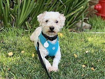 Adopt A Pet :: Koko-ADOPTED  - Santa Clara, CA