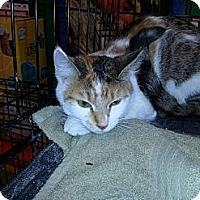 Adopt A Pet :: Patches - Ortonville, MI