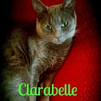 Adopt A Pet :: Clarabelle - Grand Blanc, MI