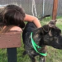 Adopt A Pet :: TONIO - Chandler, AZ
