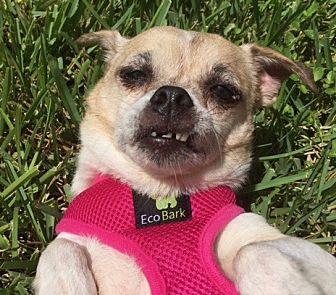 Adopt A Pet :: Happy Mama...  - Ft Myers Beach, FL