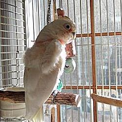 Avian Rescue Corporation in Concord, California