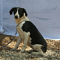 Adopt A Pet :: Buttercup - Ashland, AL