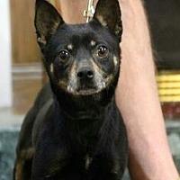 Adopt A Pet :: LuLu *Requires Medication* - Detroit, MI