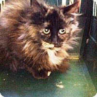 Adopt A Pet :: Jill - Putnam, CT