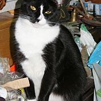 Adopt A Pet :: Sylvie (COURTESY POST) - Baltimore, MD