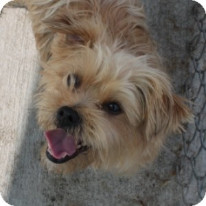 Small Dogs For Adoption In Illinois