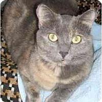 Adopt A Pet :: Sheba and Casper - Strathmore, AB