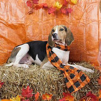 Adopt A Pet :: Dover  - Oklahoma City, OK
