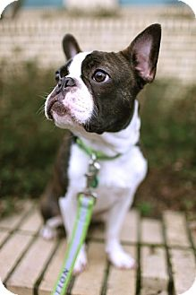 Dogs Of Adoption In Portland Oregon