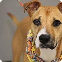 Adopt A Pet :: Jena - Lebanon, CT