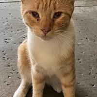 Adopt A Pet :: Marilyn Monroe - Oakdale, CA