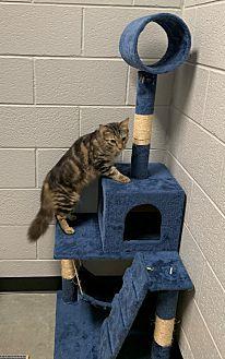 Adopt A Pet :: Adam  - Henderson, NC