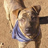 Adopt A Pet :: Newt - Cross Roads, TX