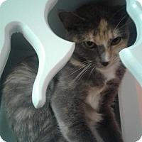 Adopt A Pet :: Catsy Cline - Lake Charles, LA