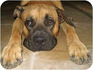 Dog Adoption Scottsdale Az
