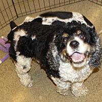 Adopt A Pet :: Mario - Tacoma, WA