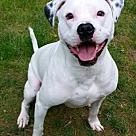 Adopt A Pet :: Polka