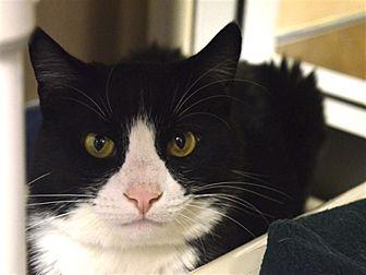 Adopt A Pet :: Westley  - Edmonton, AB