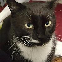 Adopt A Pet :: Esmerelda - Freeport, NY