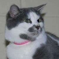 Adopt A Pet :: Jody - Erie, PA