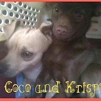 Adopt A Pet :: Krispy - Fresno, CA
