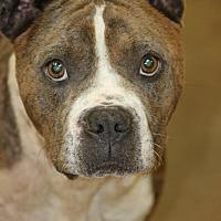 Adopt A Pet :: Tick - Hooksett, NH