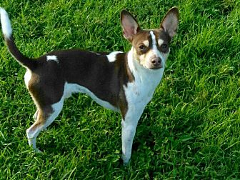 Adopt A Pet :: Mr Personality  - Ft Myers Beach, FL