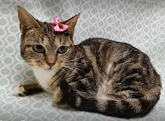 Adopt A Pet :: Muffy  - Northwood, NH