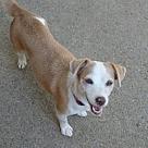 Adopt A Pet :: Beth