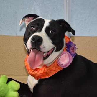 Adopt A Pet :: Zoey  - Lucedale, MS