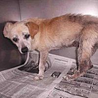 Adopt A Pet :: EUNICE - Los Angeles, CA