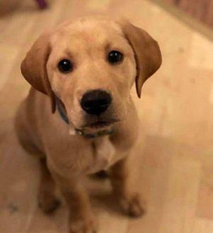 Adopt A Pet :: Oliver  - Anchorage, AK