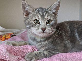 Adopt A Pet :: Ruth  - Laramie, WY