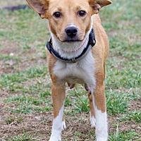 Adopt A Pet :: Abby - Waldorf, MD