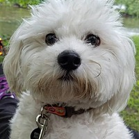 Adopt A Pet :: Emily-ADOPTION PENDING! - Wood Dale, IL